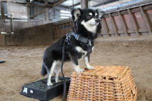 Dog-behaviour