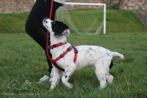 Dog-Behaviour-classes