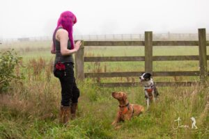Dog-trainer-Cumbria